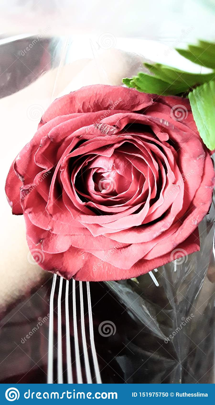A rose for aum rose