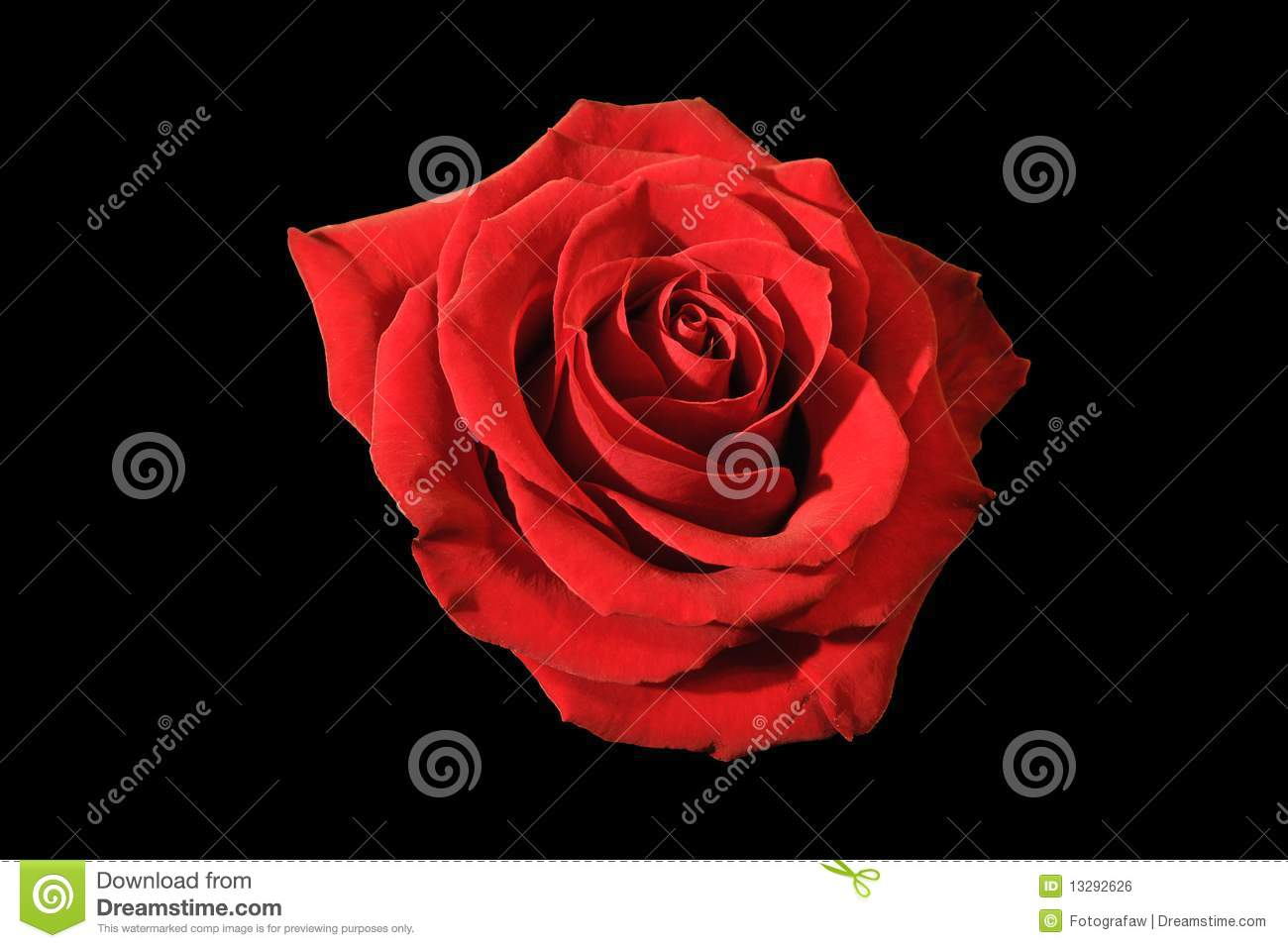 46 136 Red Rose Black Background Photos Free Royalty Free Stock Photos From Dreamstime