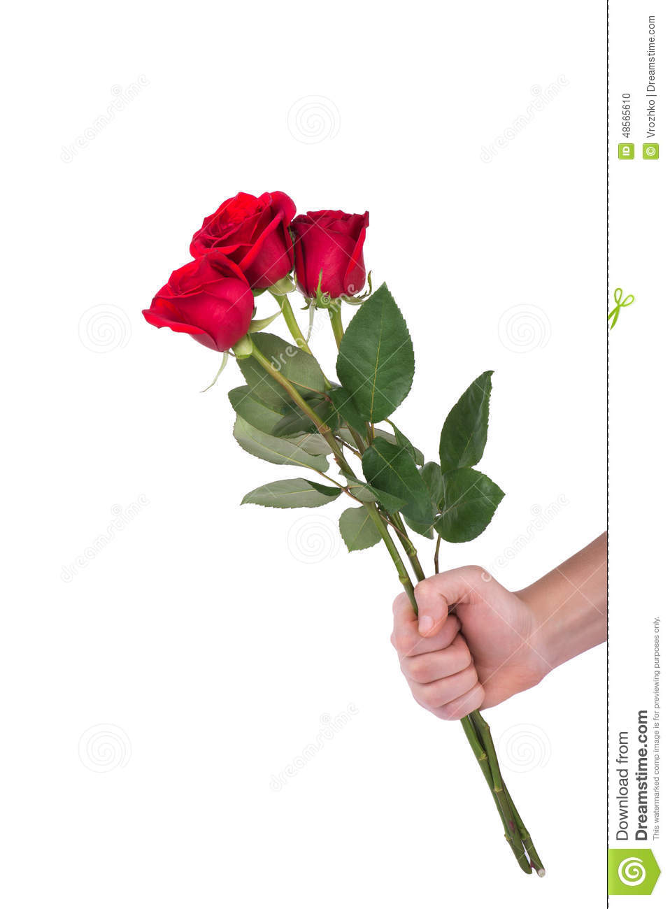Red Rose Bouquet Flower In Hand Men Isolated With Clipping Path