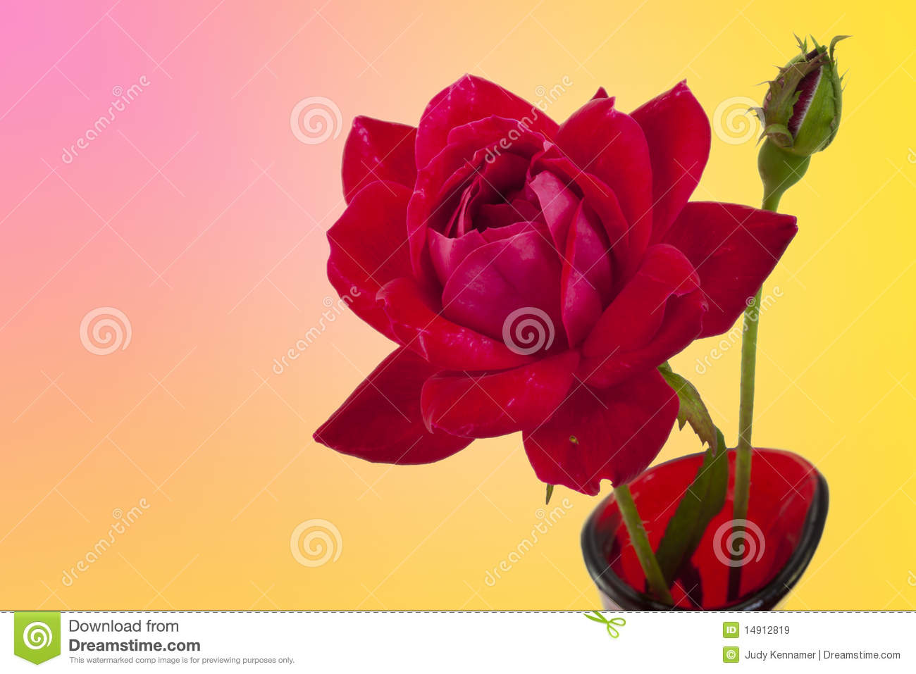 Red Rose And Bud On Pink And Yellow Background Royalty Free Stock Images Image 14912819