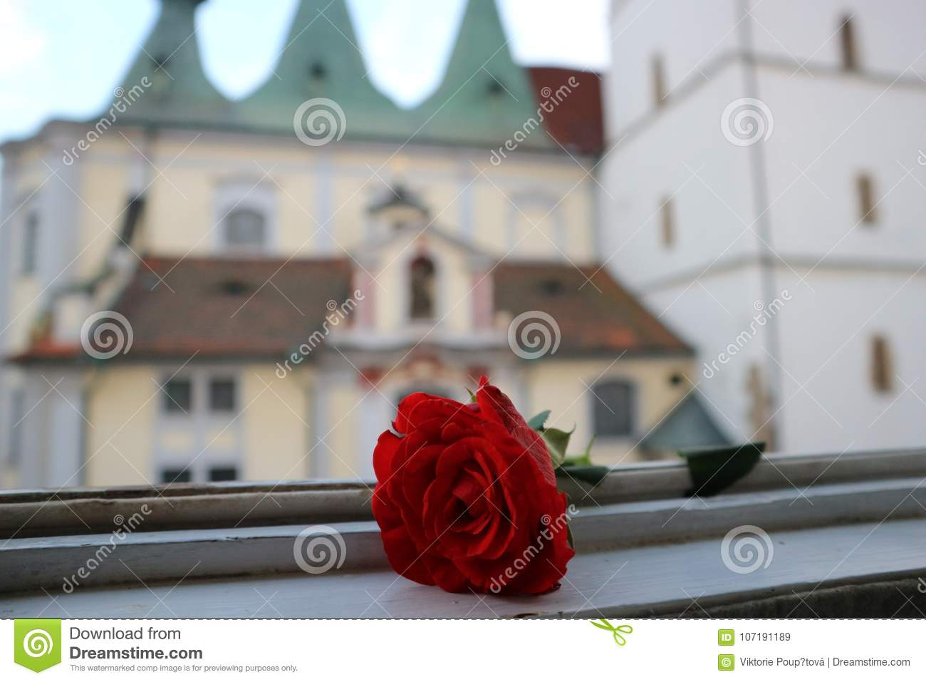Red rose and church