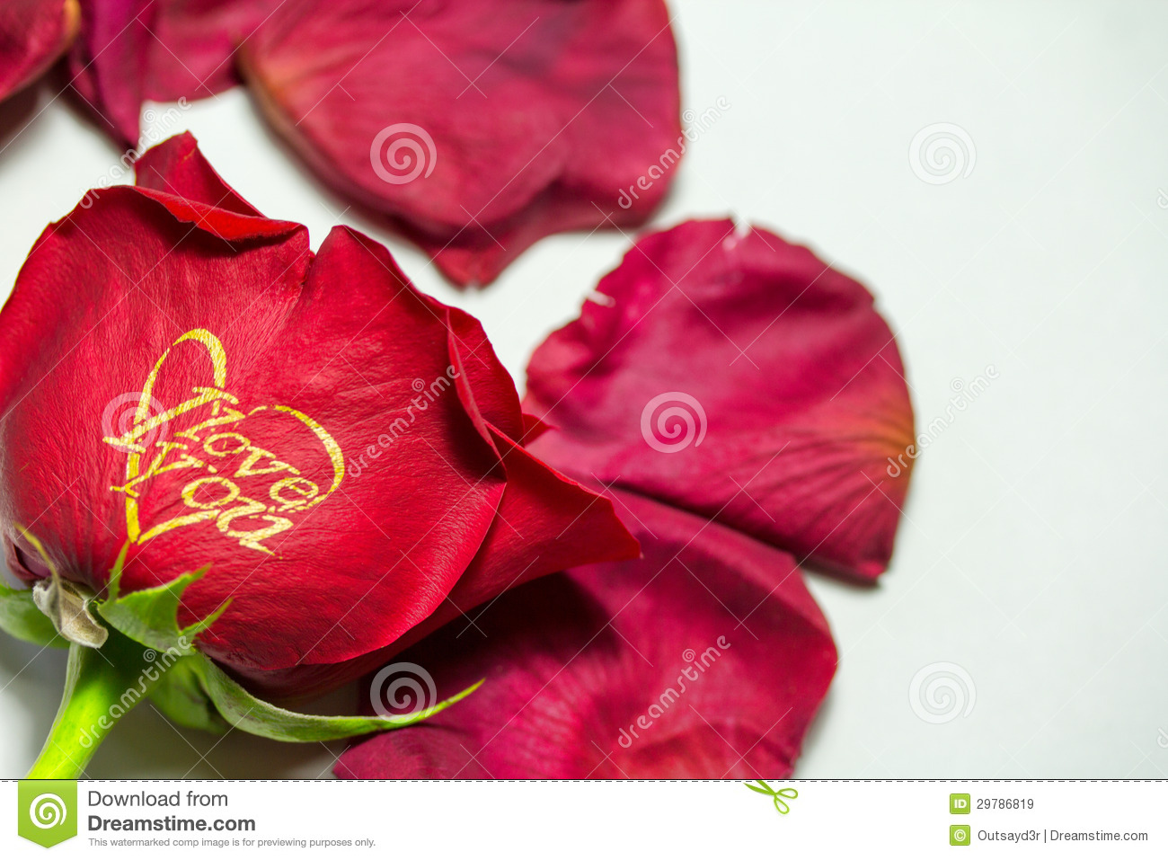 Red Rose I Love You Stock Image Image Of Surprise Dedication
