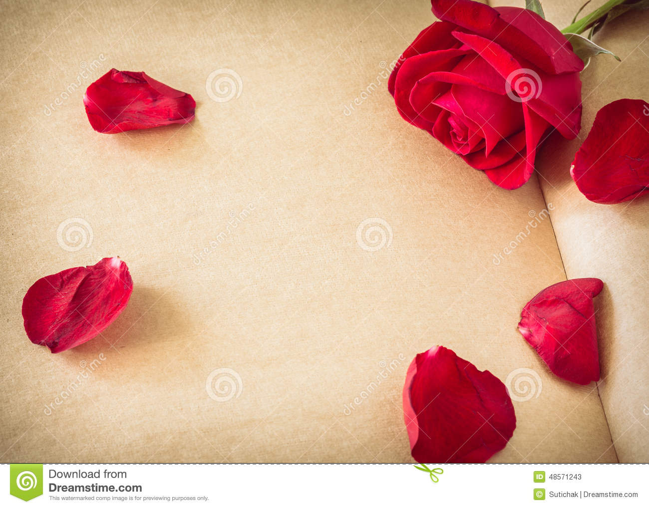 Photo Page: Red Rose Flower On Blank Paper Stock Image
