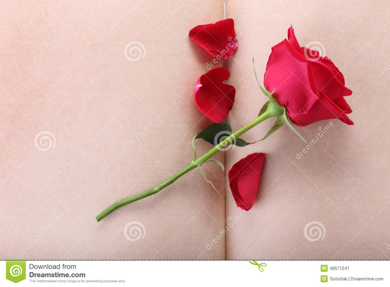 Red Rose Flower On Blank Paper Stock Image - Image of gift, card ...
