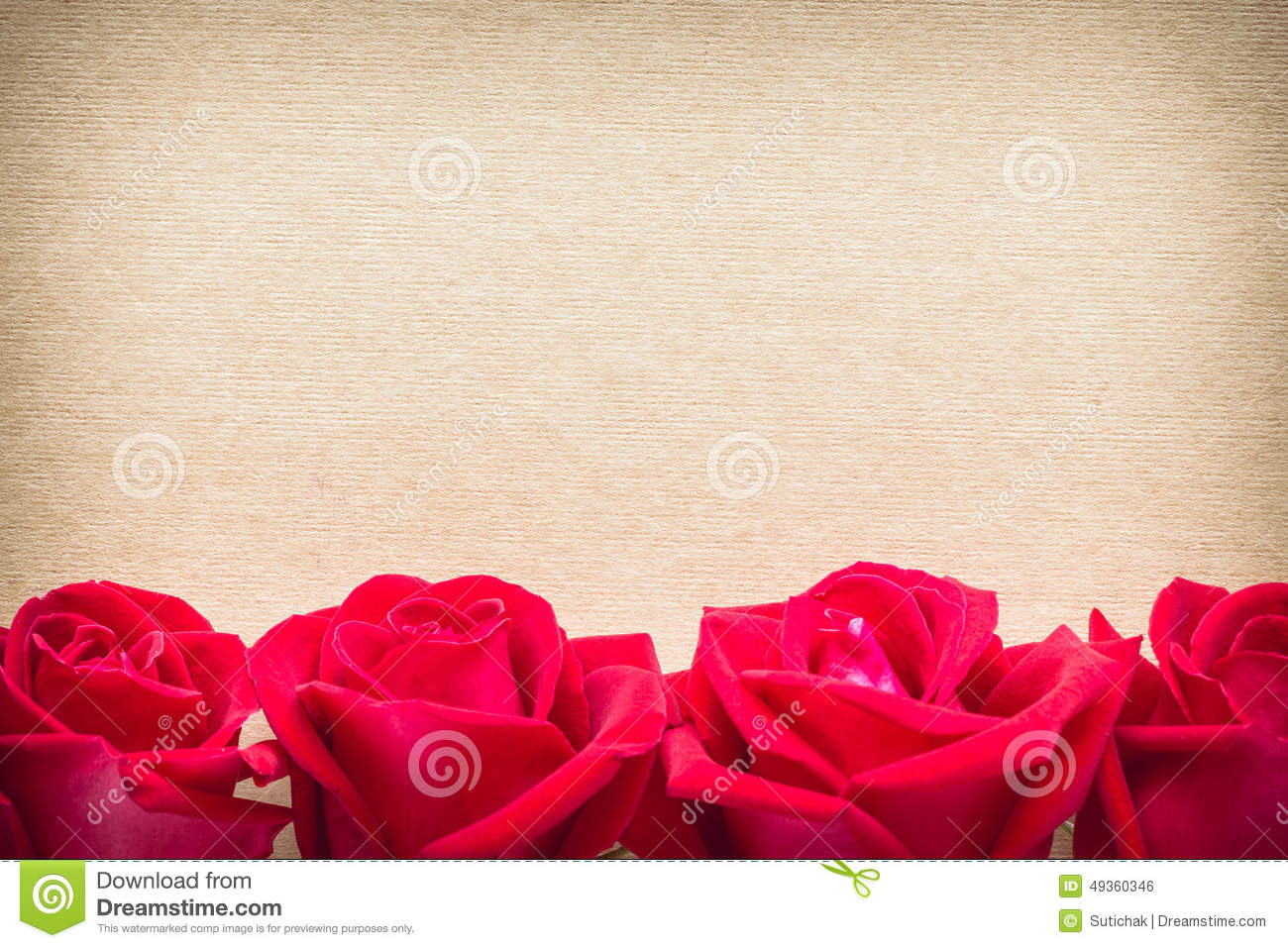 Red Rose Flower On Blank Paper Page For Creative Stock Photo - Image ...