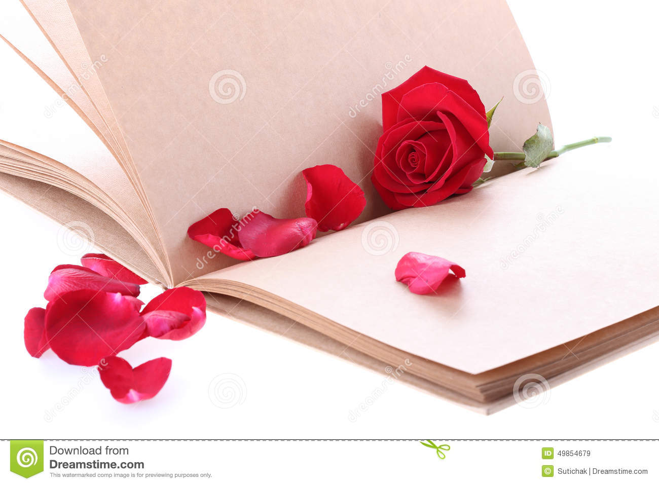 Red Rose Flower On Blank Paper Page For Creative Stock Photo ...