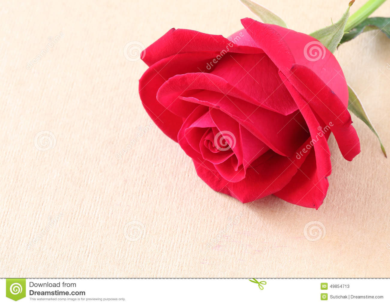Red Rose Flower On Blank Paper Page For Creative Stock Image - Image ...