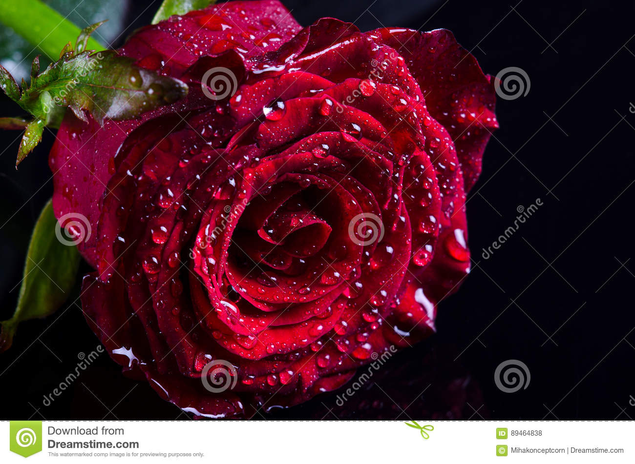 Red Rose Flower With Drops Of Dew On A Black Background Macro
