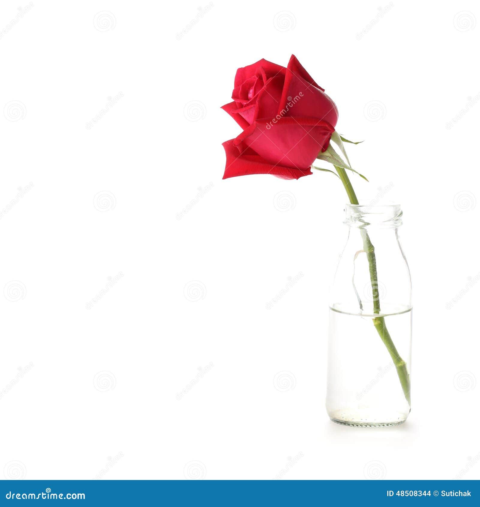 Red Rose Flower In Glass Vase Stock Photo Image Of Bottle Love 48508344