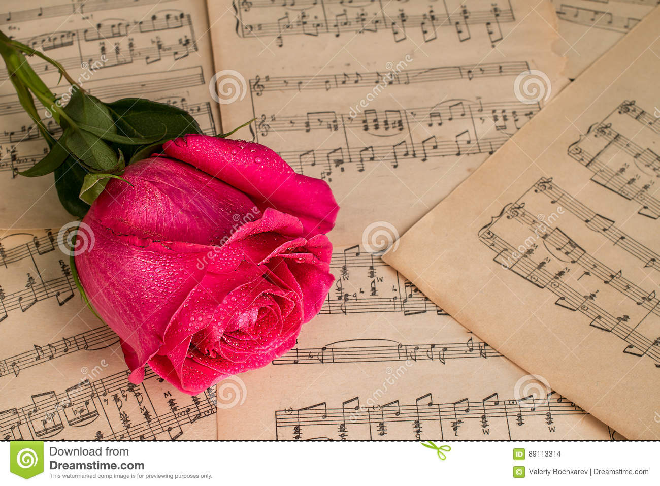 Red Rose Flower And Music Notes Sheet Stock Photo Image Of Note