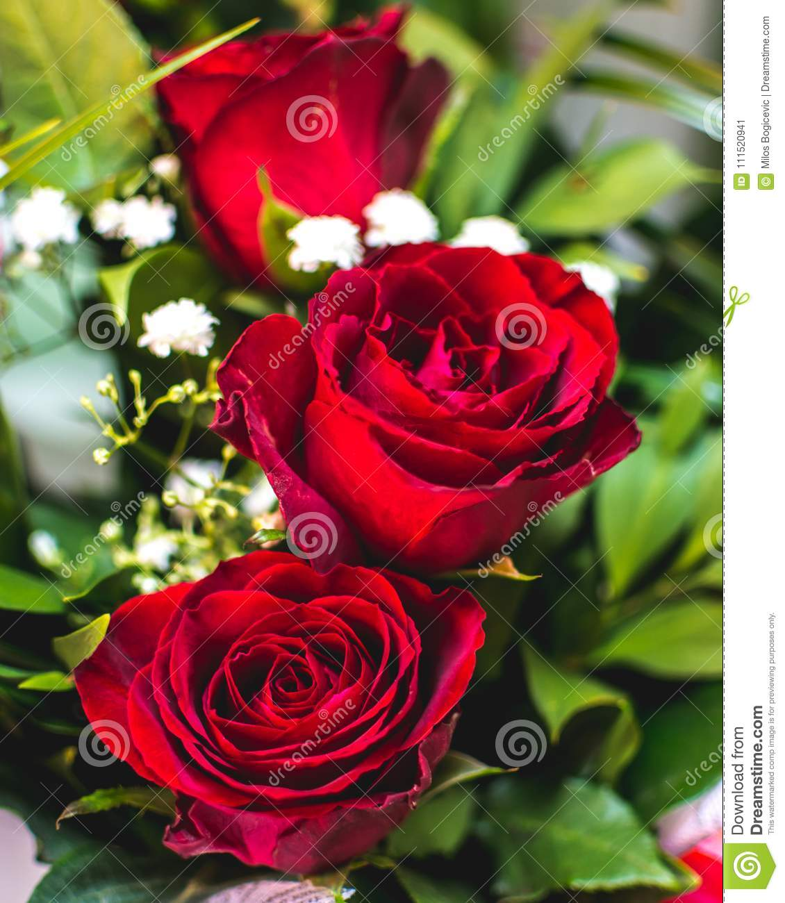 Love Garden Roses: Red Rose Flower. Sign Of Love. Summer Garden Flower. Stock