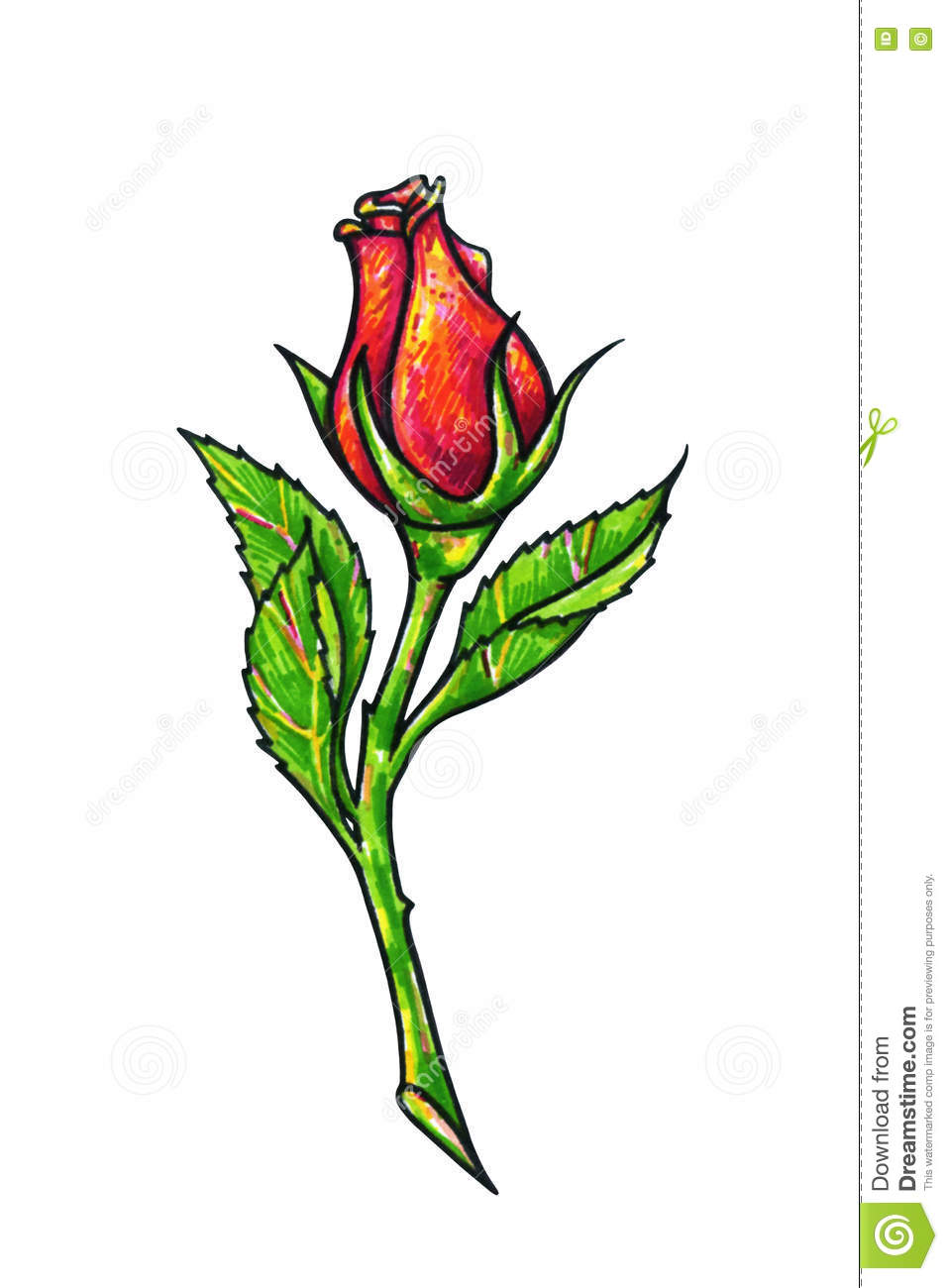 Red Rose Flower Is On A White Background Rose Drawing Front View