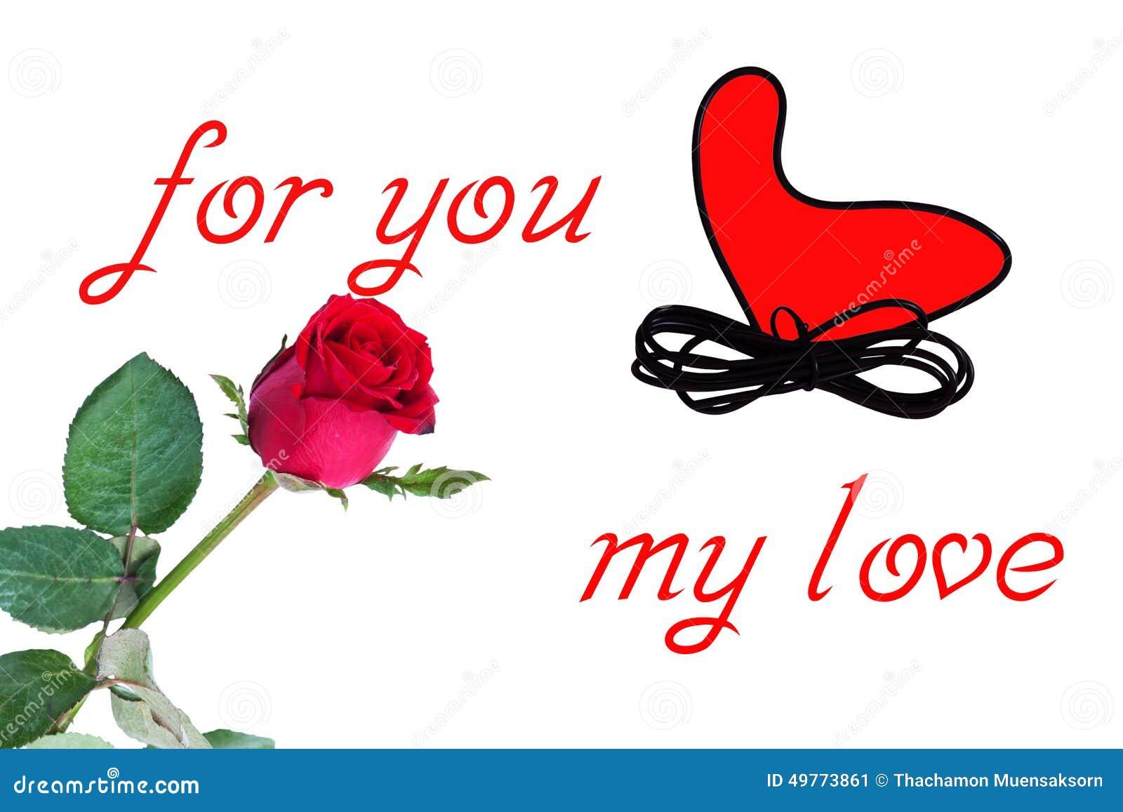 Red Rose Flower Stock Image Image Of Beautiful Shot 49773861