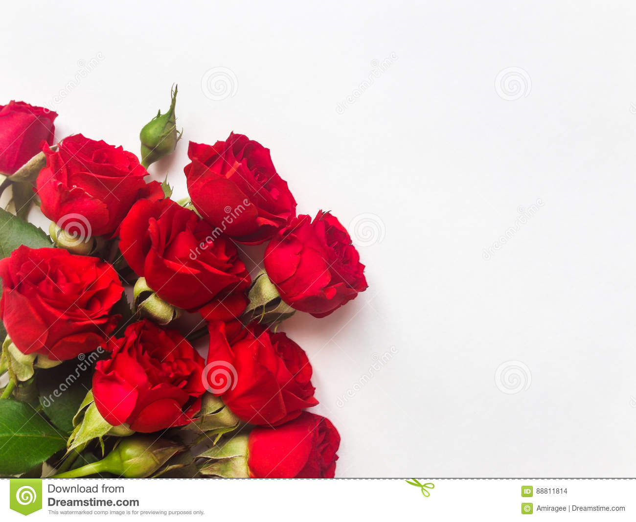 Bunch Of Small Beautiful Red Rose Flowers Isolated On White Background Romantic Gift Concept For Birthday Or Any Other Holiday Flat Lay Top View