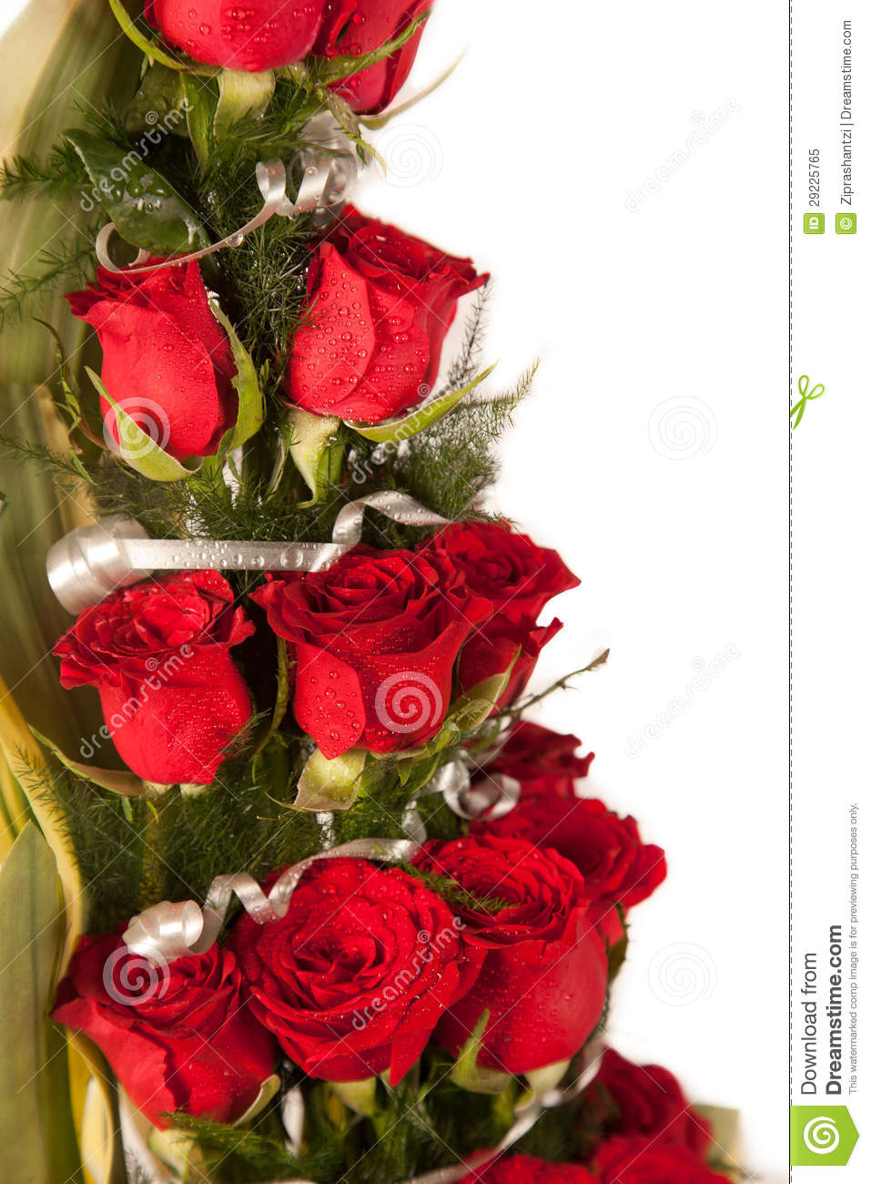 Red Rose Flowers With Water Drops Stock Image Image Of Elegance