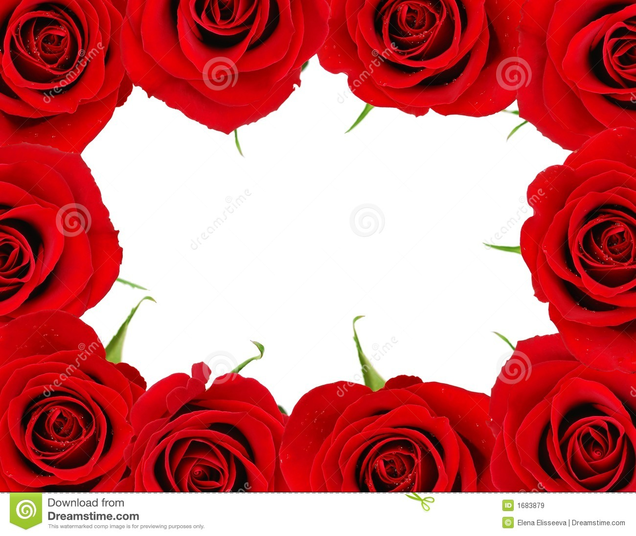 Red roses frame with white space for copy for Valentine's day.