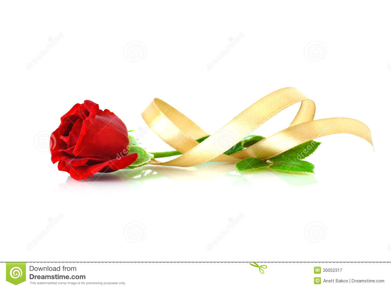 Beautiful Single Red Rose Flower Isolated Royalty Free: Red Rose With Gold Ribbon Over White Royalty Free Stock