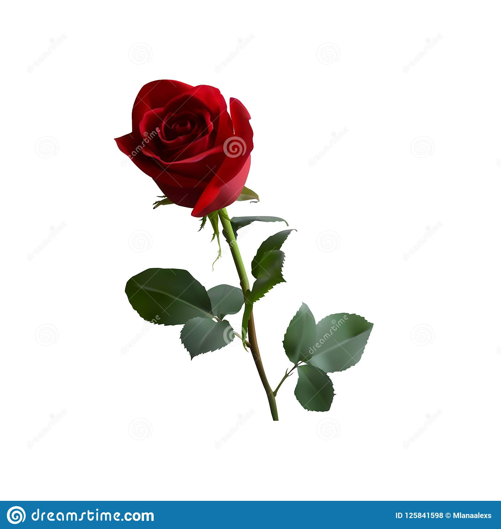 Red Rose With Green Leaves On A Long Green Stem Stock Vector