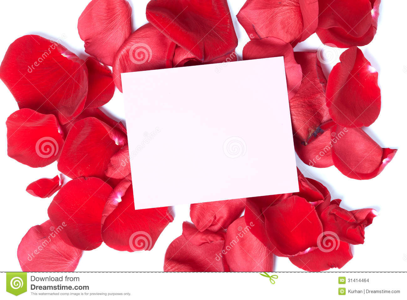 Red Rose Greeting Card Stock Photo Image Of Gardening 31414464