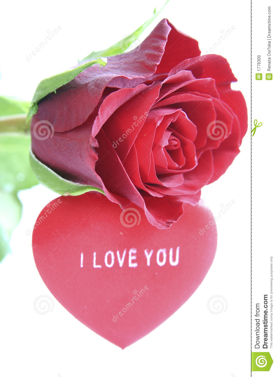 red rose and heart stock photo image of date celebration 1776300