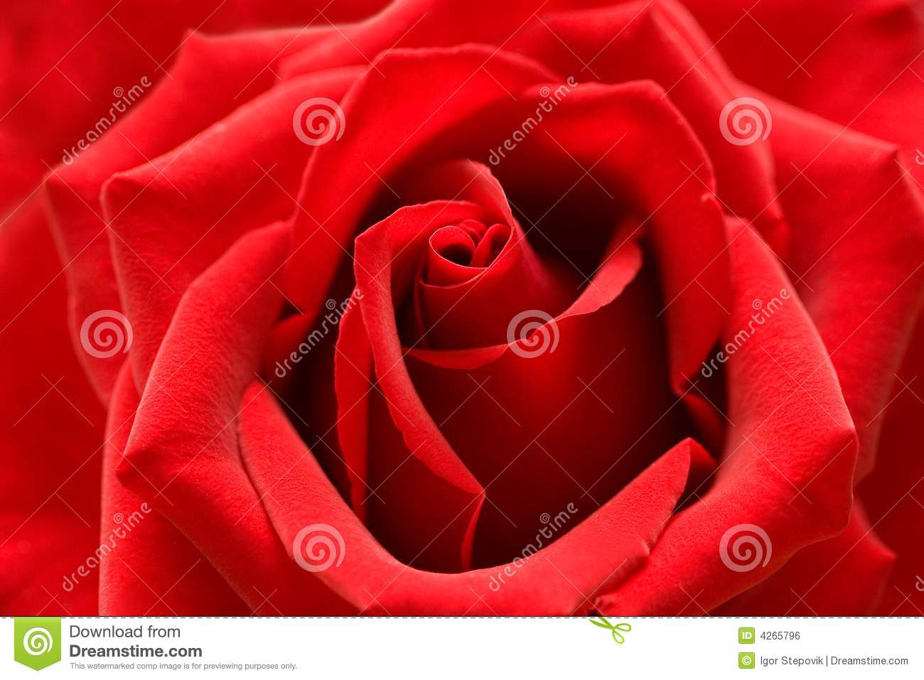 red rose with heart symbol from petal in center stock photo image 4265796. Black Bedroom Furniture Sets. Home Design Ideas