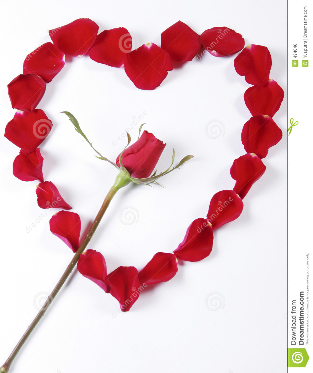 Red Rose Inside Rose Petals In Heart Shape Stock Photo Image Of