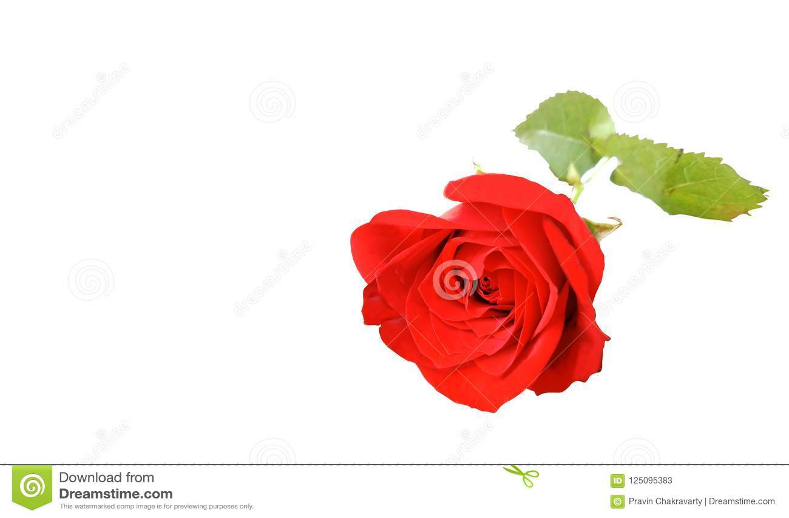 Rose Flower Uses Topsimages