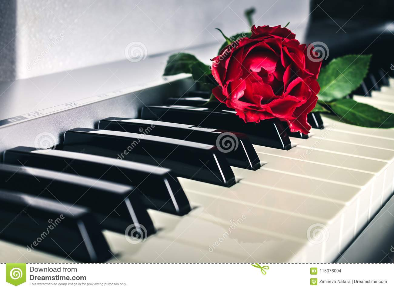 Red Rose On Keyboard Of The Digital Piano Stock Photo