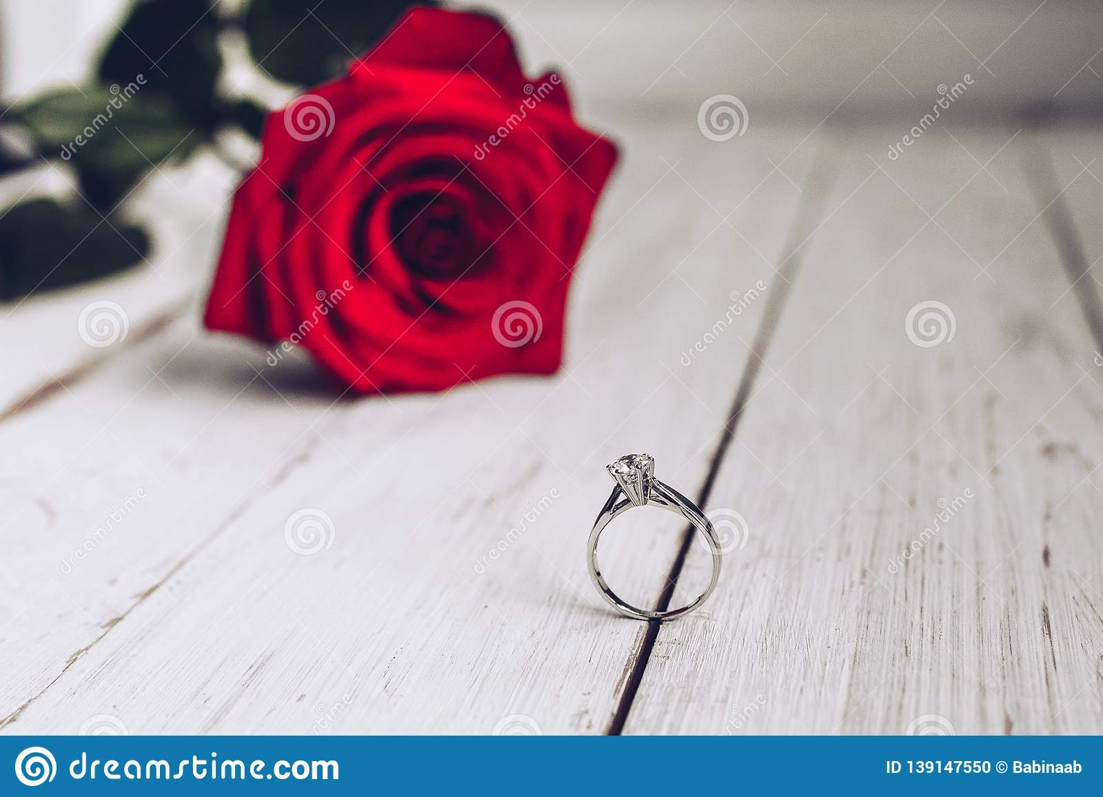 Red rose, marriage proposal, silver ring, engagement