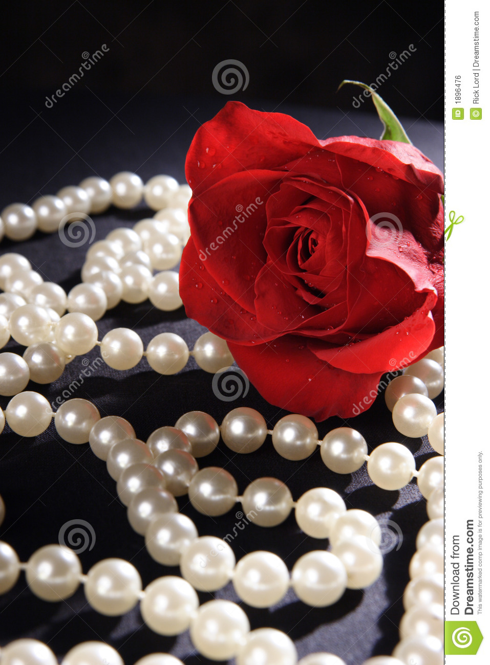 Red Rose and Pearls stock photo. Image of velvety, stem ...