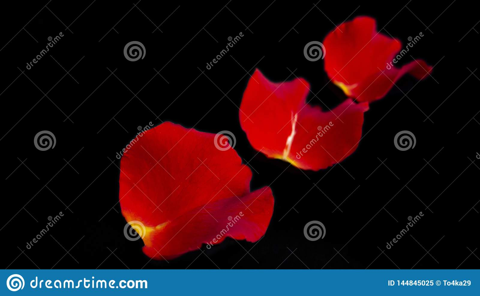 Red rose petals on black background. Isolated on black
