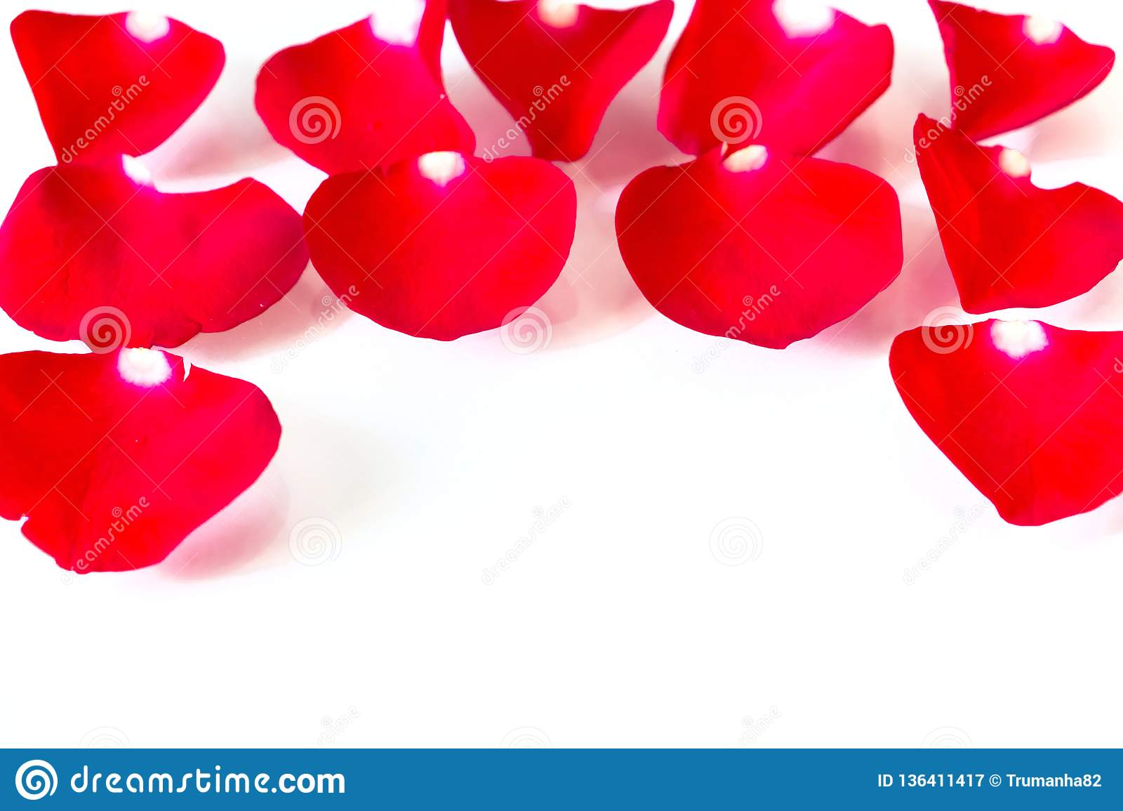 Red Rose Petals in White Background
