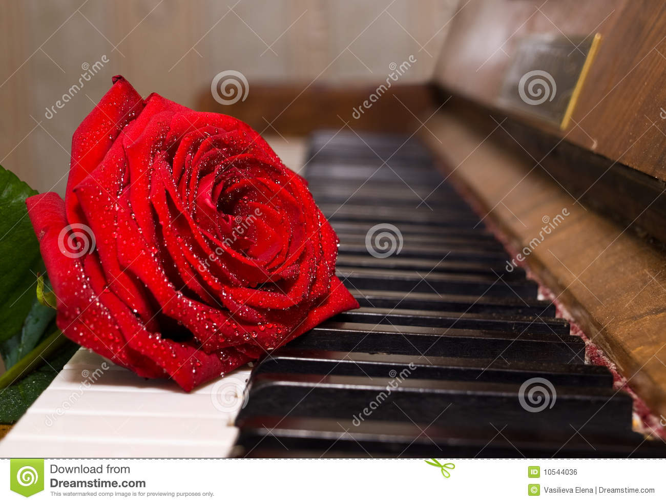 Black And White Photography Roses on Pianos Black And White Photography