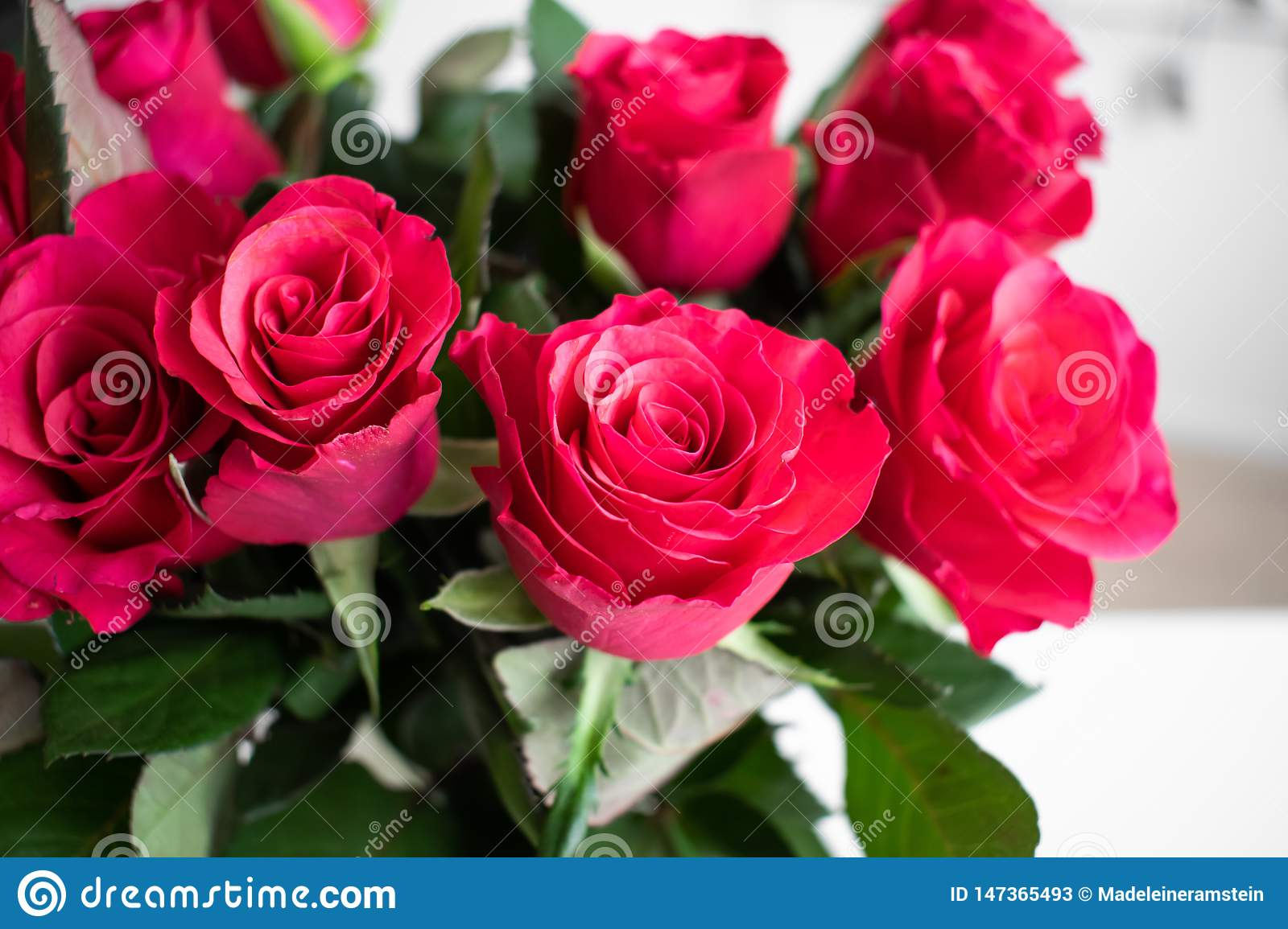 Red roses bouquet with a pink touch. Indoors with white background.