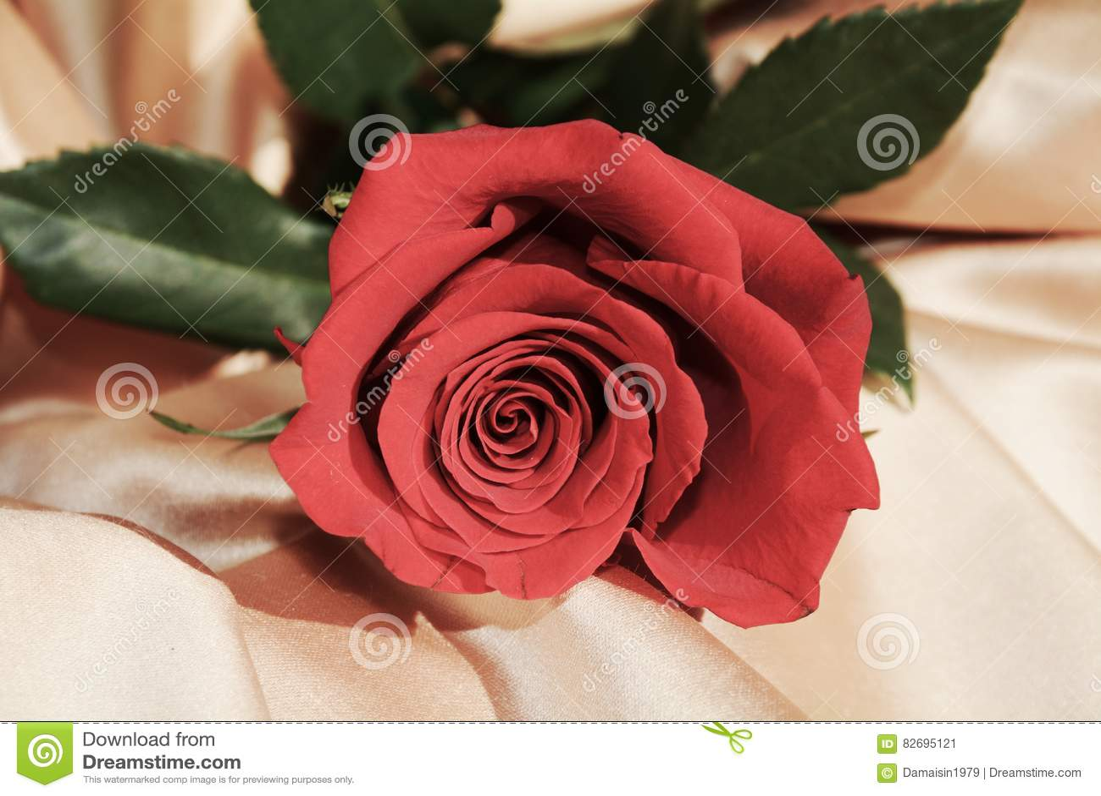 Red Rose Symbol Of Appreciation Stock Image Image Of Appreciation