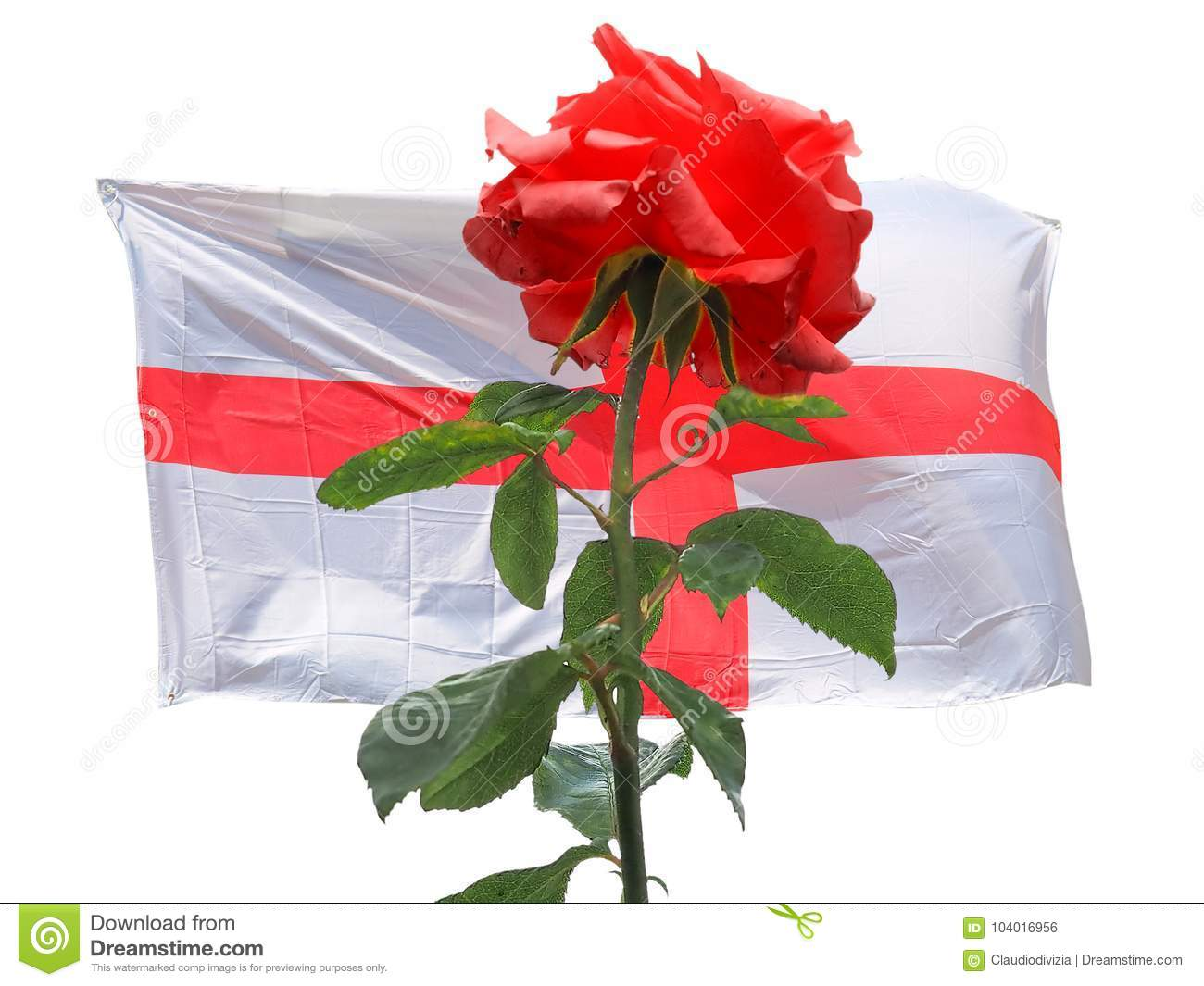 Red Rose Over English Flag Of England Stock Photo Image Of