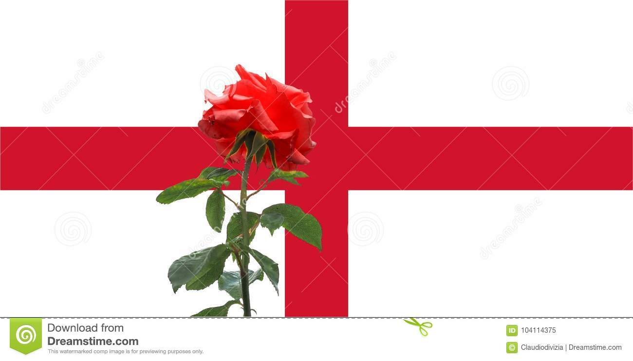 Red Rose Over English Flag Of England Stock Image Image Of Great