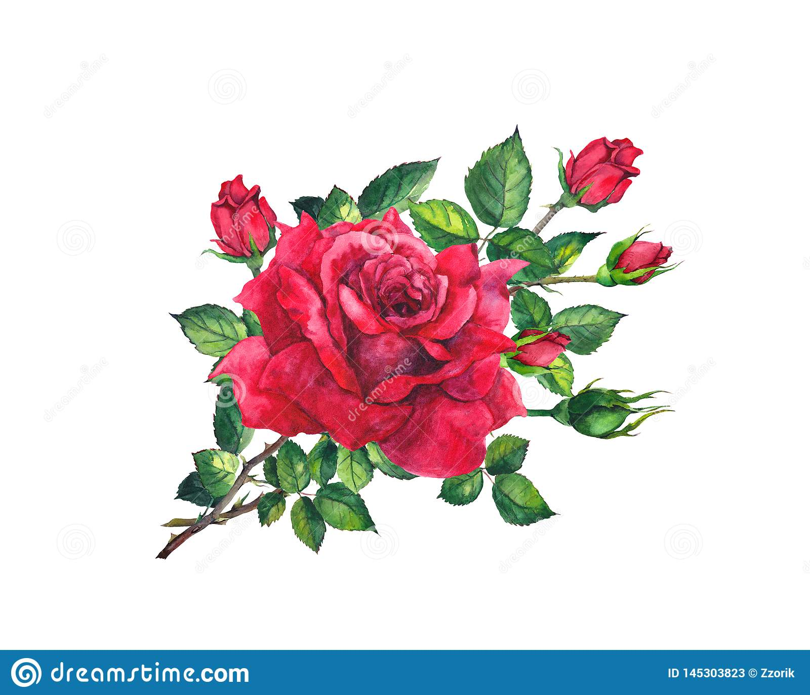 Red rose twig with flowers, leaves, buds. Floral watercolor blooming