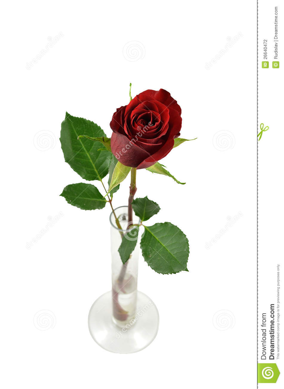 Red rose in a vase stock photo image of single rose 26640472 red rose in a vase floridaeventfo Choice Image