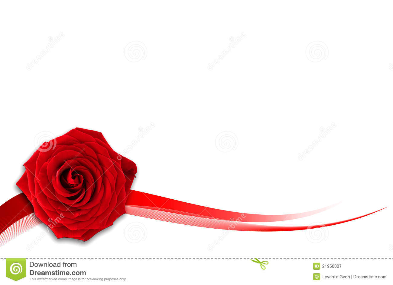 Red rose on the white background stock image image of fragrant red rose on the white background voltagebd Gallery