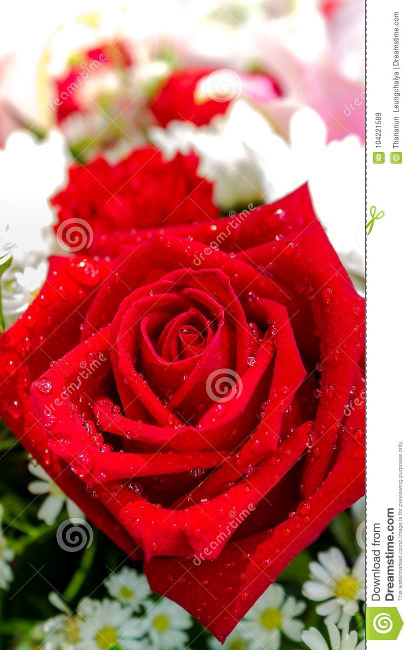 Red Rose And White Flowers In Bouquet Stock Image Image Of
