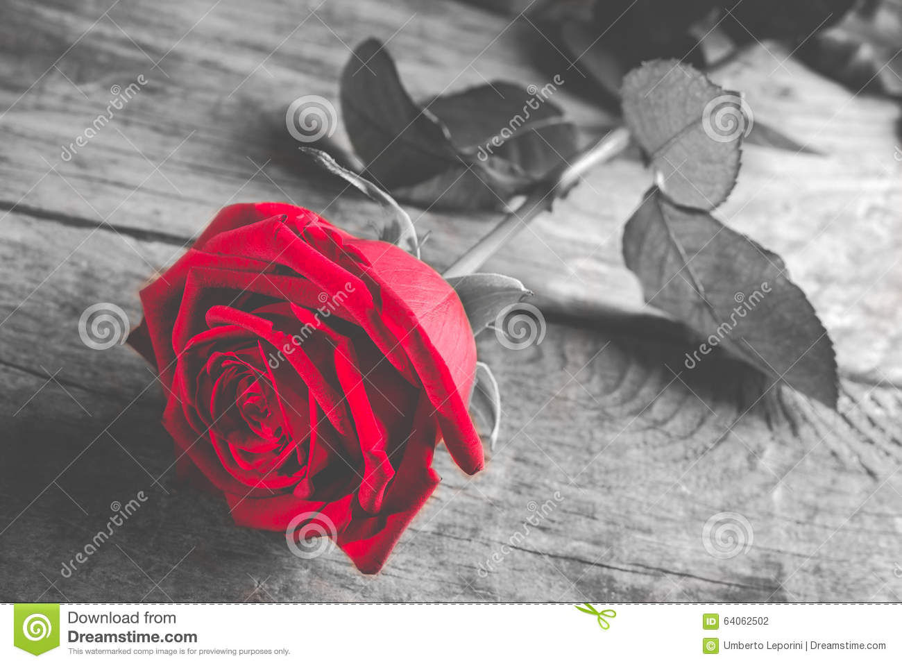 Red Rose On Wood Black And White With Single Flower Colored Stock