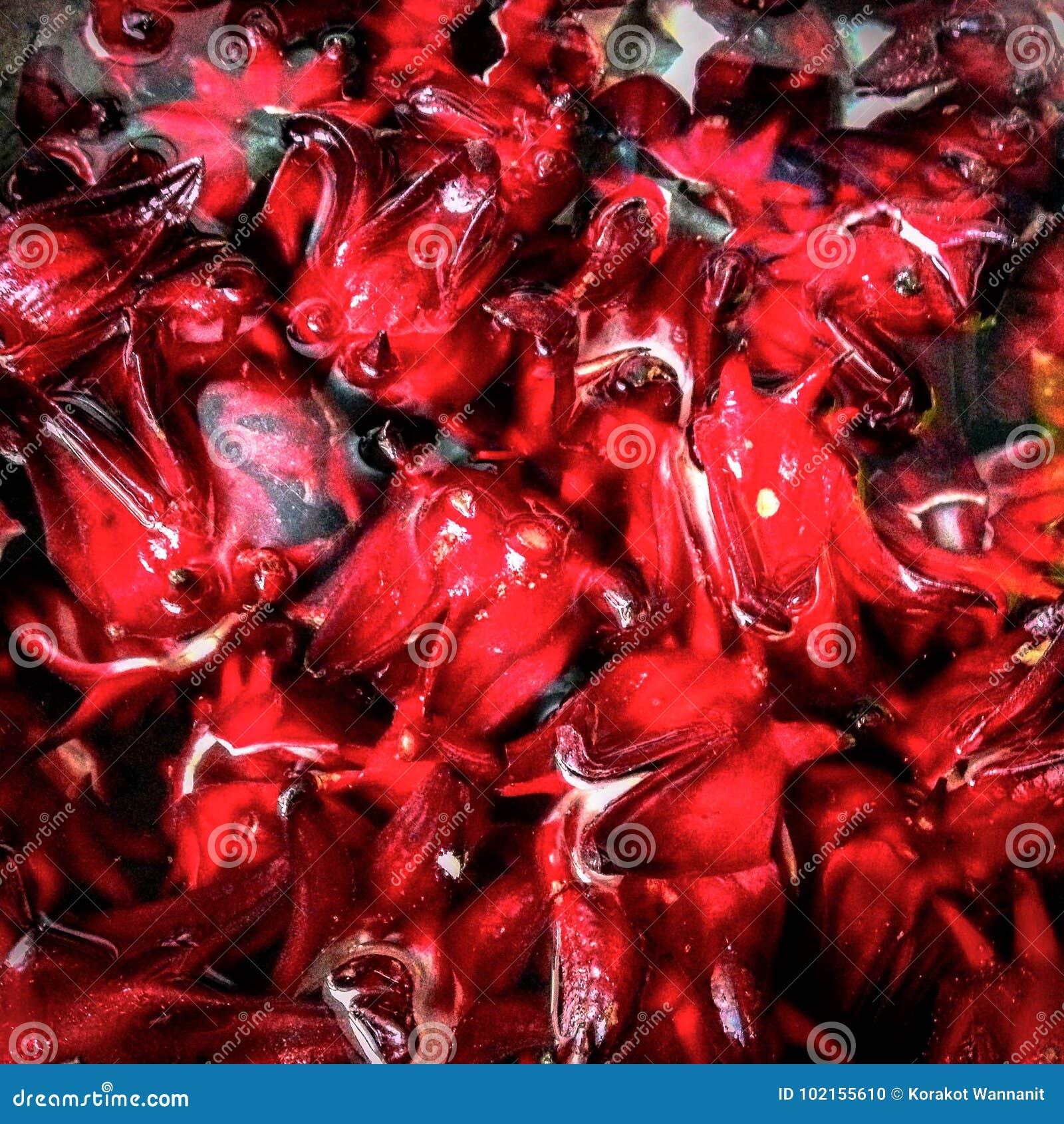 Roselle Fruit Red Stock Image
