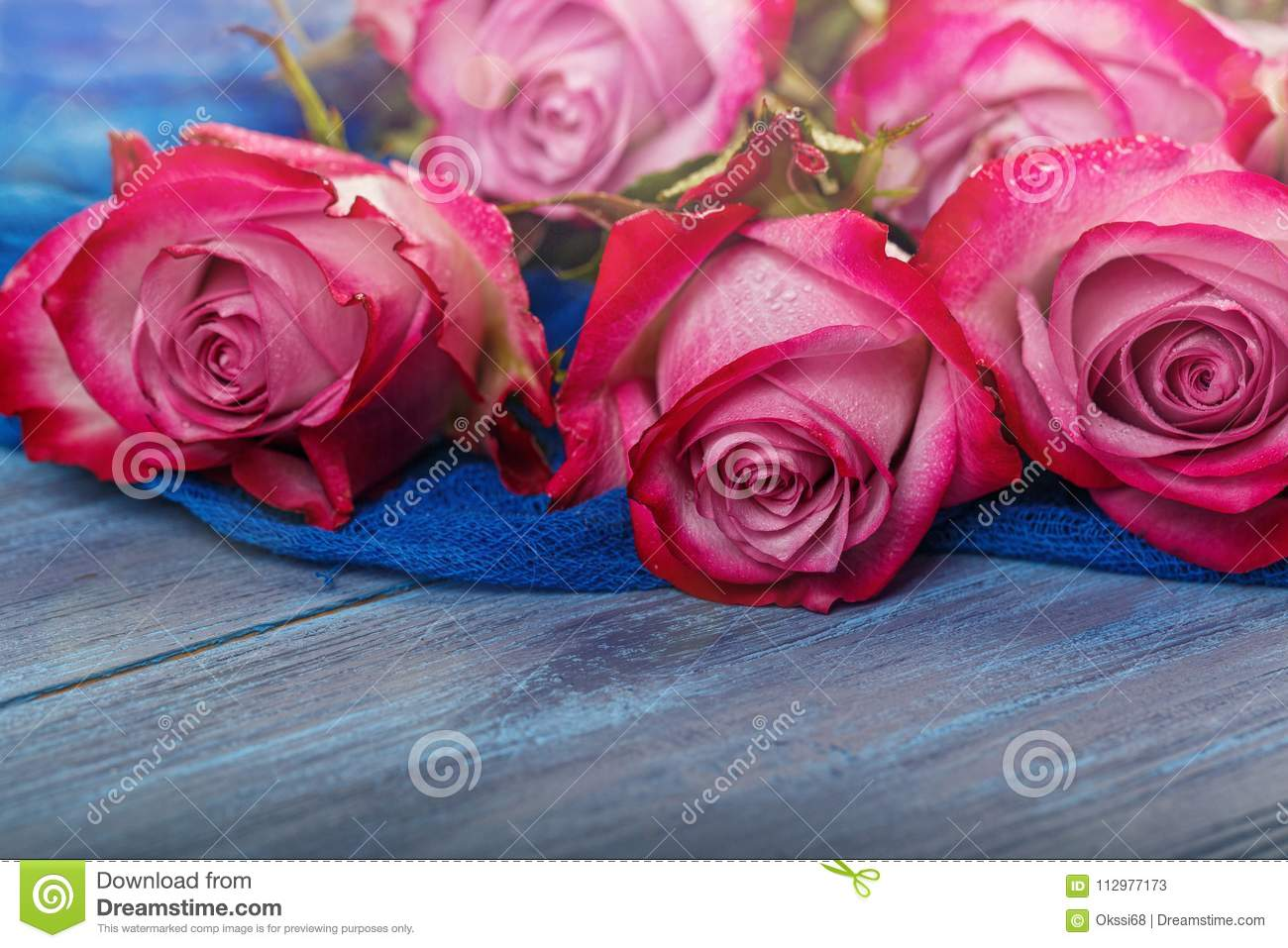 Red roses on a blue background