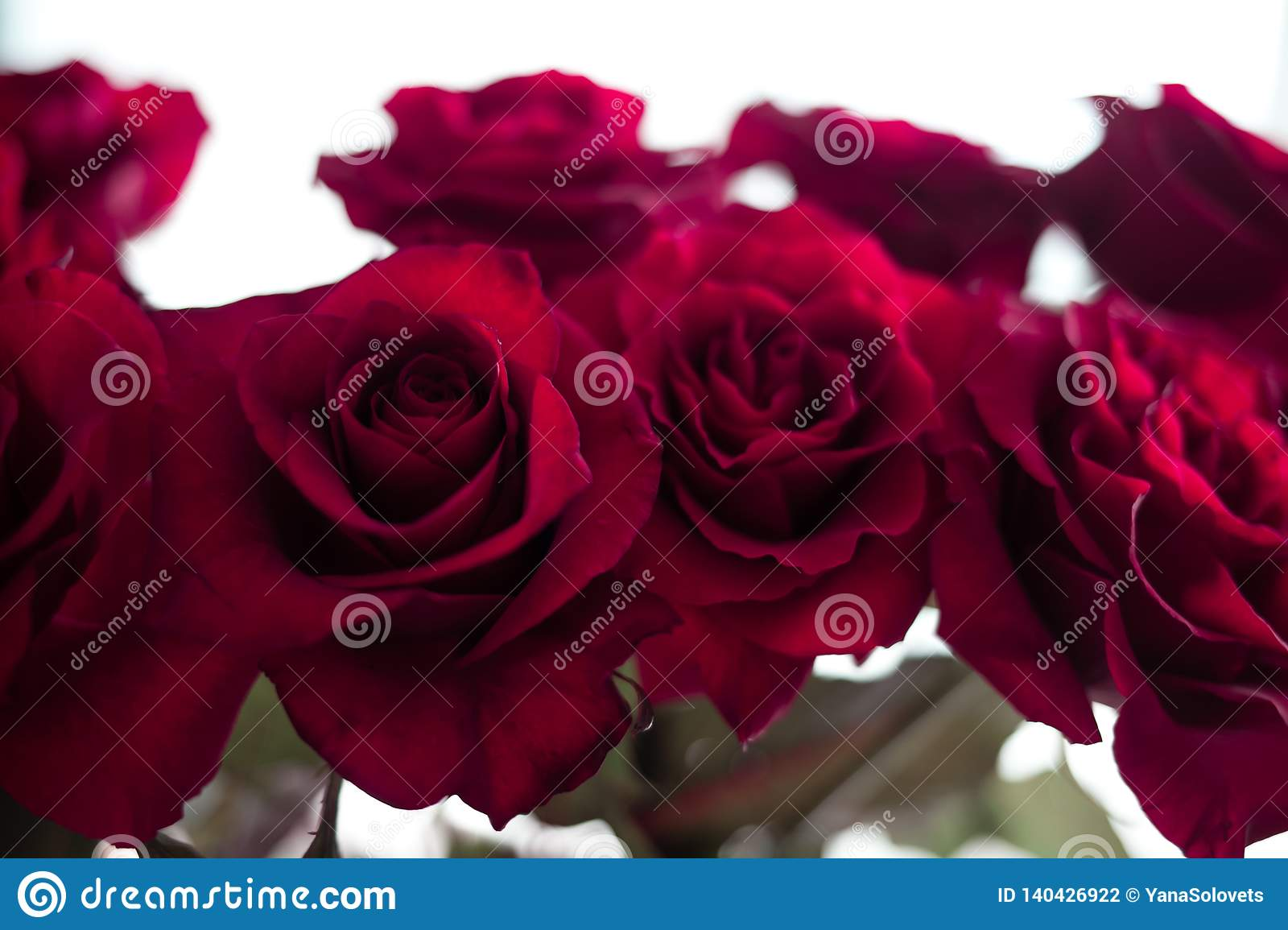 Red roses on the blurred background