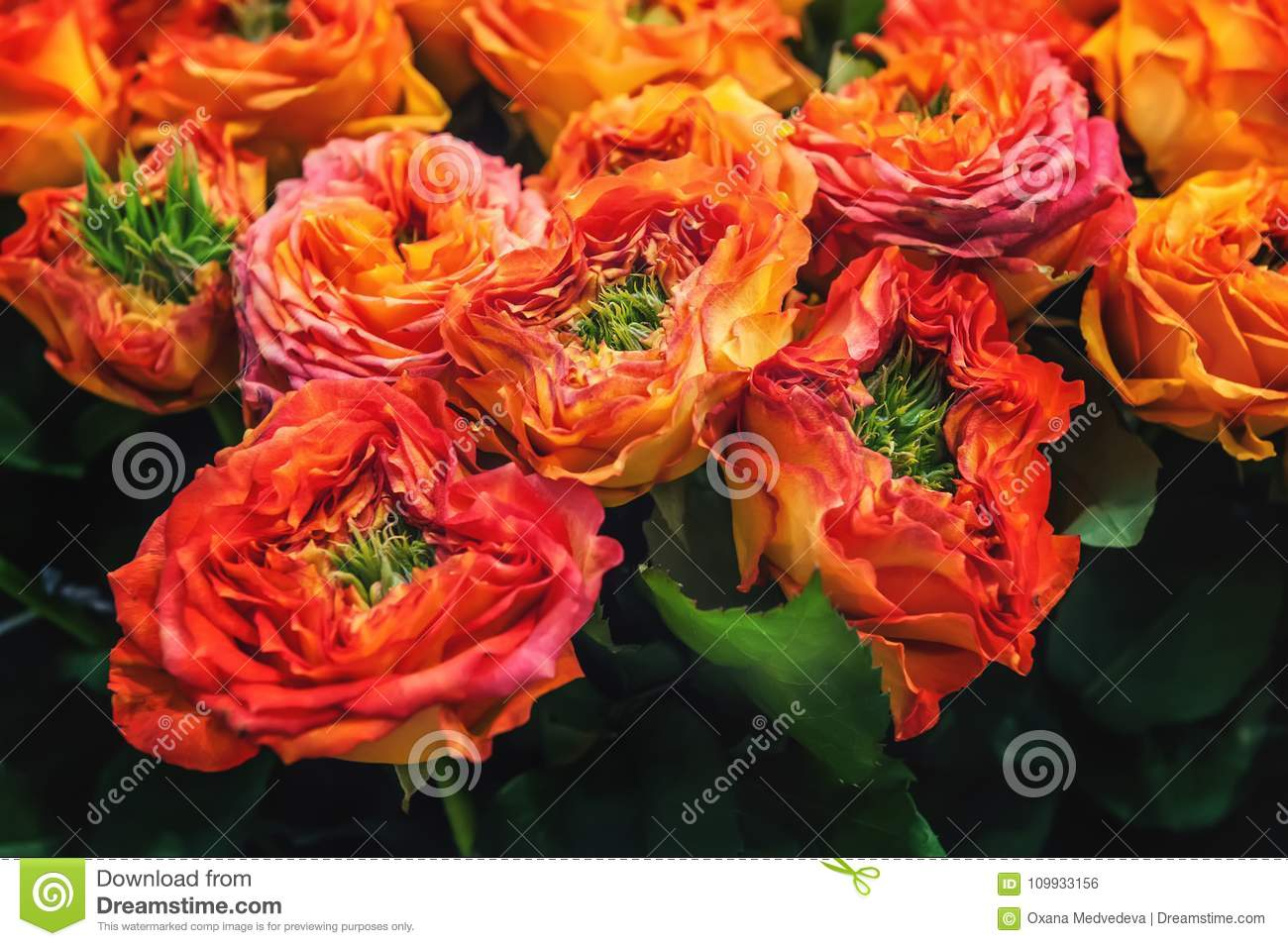 Red Roses With Green Middle Of The Original Selection Of A Large