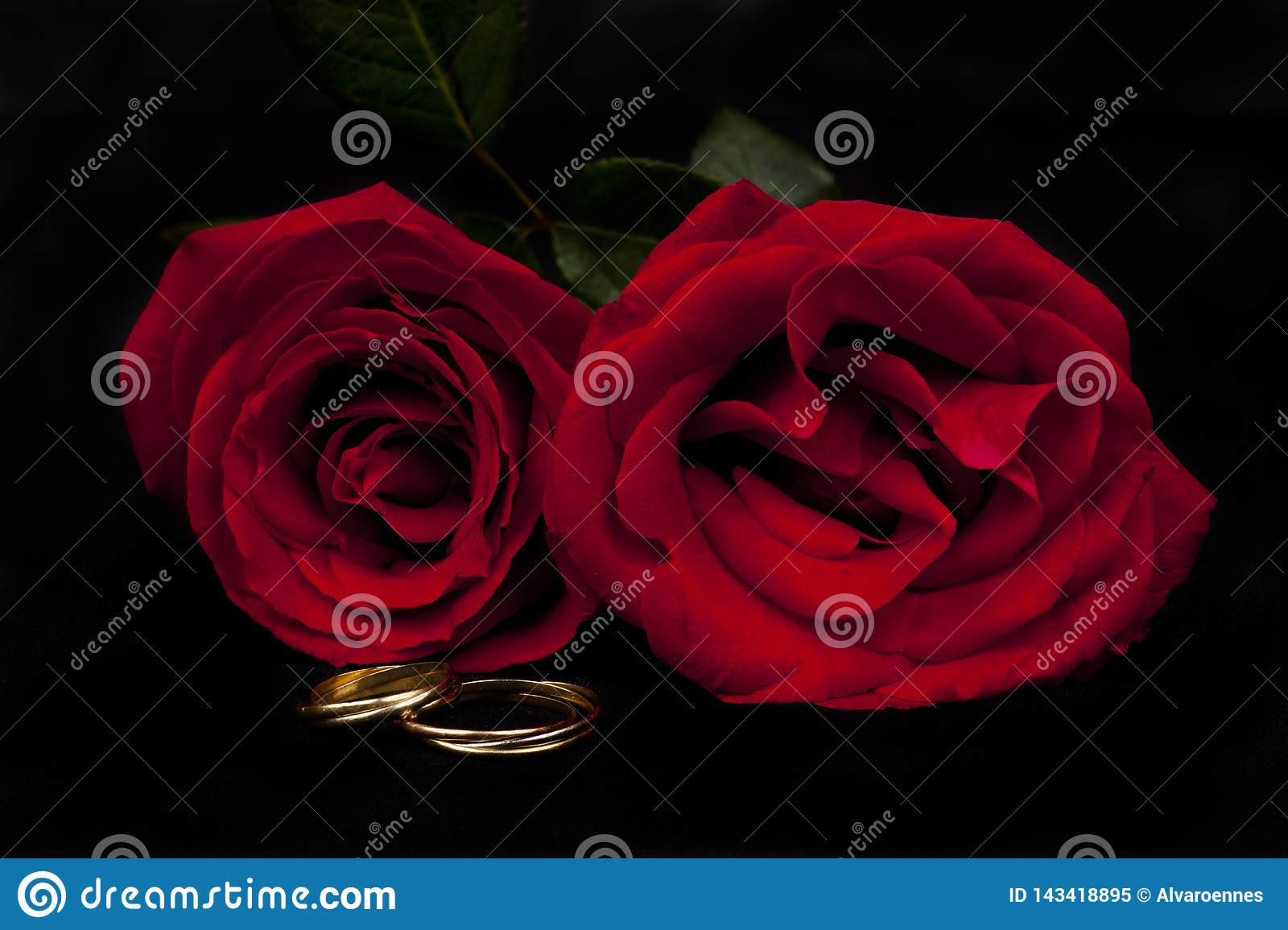 Romantic red roses with a pair of alliances