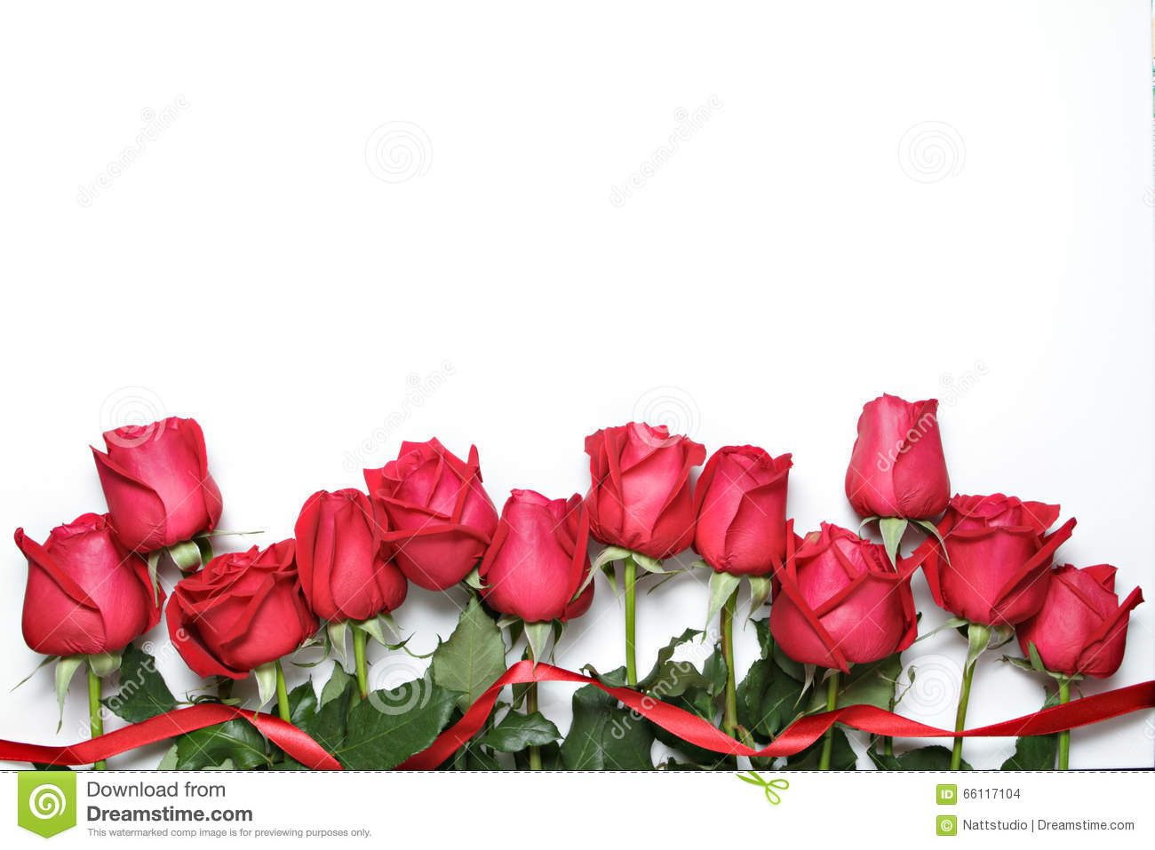 Red roses with ribbon on white background. Valentine s Day, anniversary and congratulations background.