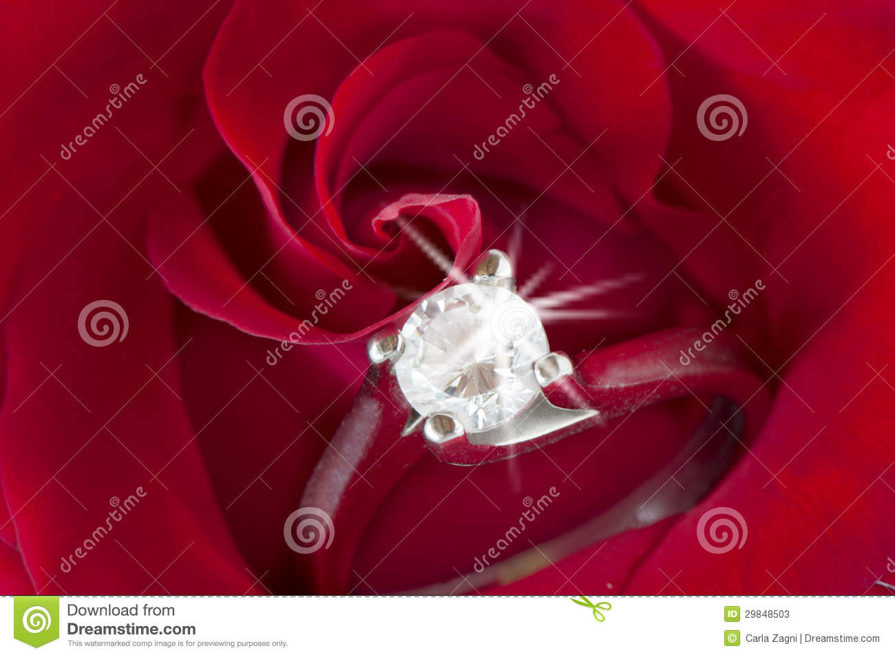 Red Roses And Wedding Rings Stock Photos Image 29848503