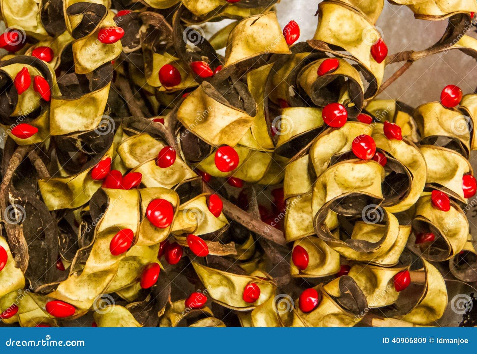 Red sandlewood seeds